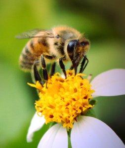 Api, Ue mette al bando i pesticidi killer. Ma la strada è ancora lunga