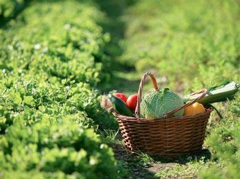 Crisi economica e voglia di cibo sano: record di orti in città