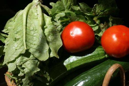 Autoproduzione fuorilegge? La proposta Ue contro i piccoli coltivatori