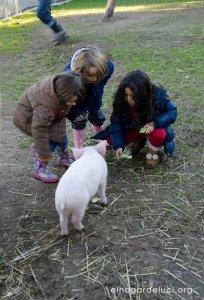 El Hogar de Luci, in Spagna un santuario per animali