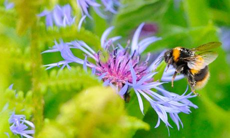 """Biodiversità a rischio: """"distrutto il 60% degli ecosistemi"""""""