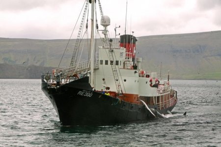 L'Islanda riprende la caccia alle balene