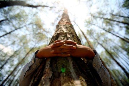 Abbracciare gli alberi fa bene, la scienza conferma