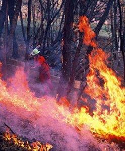 "Incendi boschivi: il decreto ""svuota carceri"" favorisce i piromani"