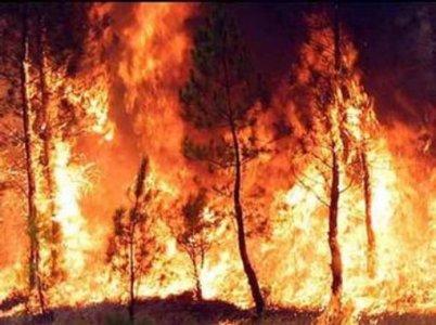 """""""Preveniamo gli incendi"""", parte la campagna"""