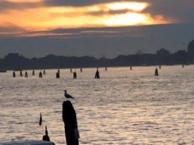 Allevamenti killer: moria di pesci in laguna a Venezia