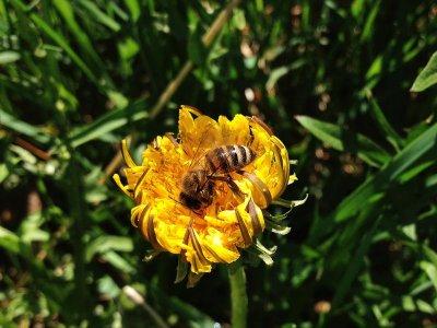Estate, i consigli 'salva-api' di Greenpeace