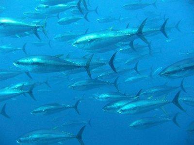 Mercurio negli oceani: sotto accusa il carbone