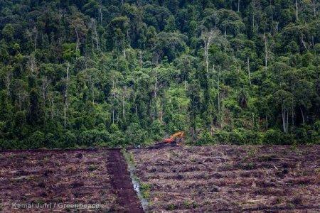 """Indonesia: """"l'olio di palma è la prima causa di deforestazione"""""""