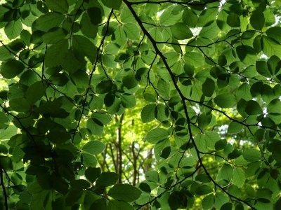 Boschi: i nostri alberi perdono foglie e colori