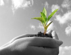 Permacultura, ovvero l'amore verso la terra