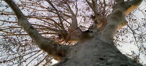 Roma in marcia per la difesa degli alberi