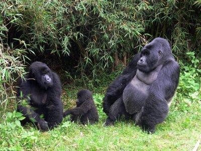 """Petrolio nel Parco nazionale del Virunga, """"stop alle esplorazioni"""""""