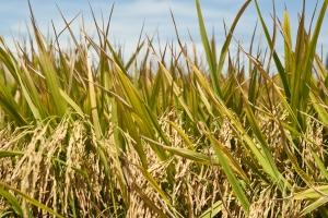 Industria dei Biocarburanti,