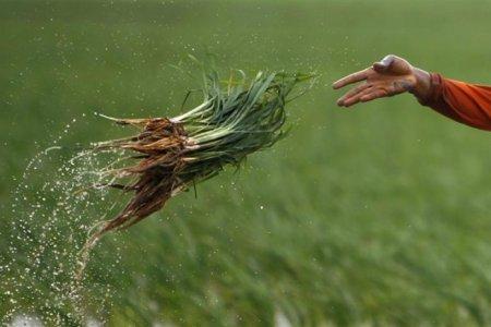 """Giornata mondiale dell'alimentazione: Actionaid lancia """"Operazione Fame"""""""