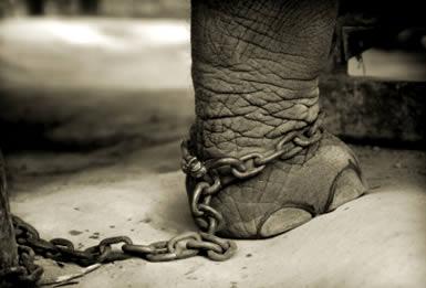 Stop a sfruttamento e violenze, petizione chiede nuove leggi per gli animali
