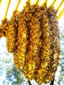 """""""Il Tempo delle Api"""": la permapicultura per salvare le api, il nostro cibo e la biodiversità"""