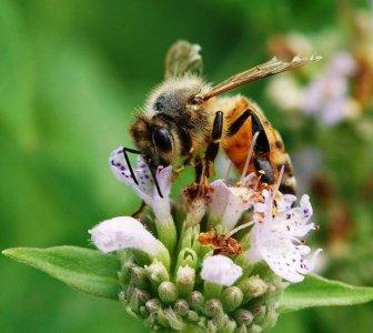 I neonicotinoidi non uccidono solo le api: pericolosi anche per gli esseri umani