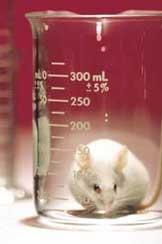 Sperimentazione animale, il diritto di dire 'no'