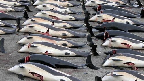 Illegale sterminare le balene: lo ha stabilito la Corte dell'Aja
