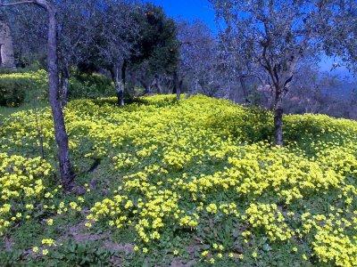 La storia di Mariano: con lui è rinato un pezzetto di Sicilia