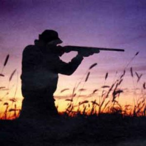 Un decreto autorizza la caccia nei Pantani della Sicilia sud orientale