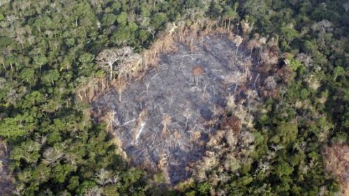 Collaborare per salvare l'Amazzonia si può, ma serve l'aiuto di tutti