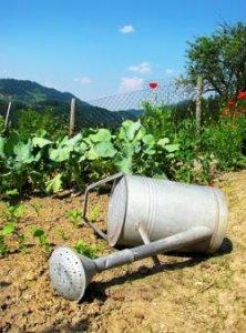 Agricoltura naturale come scelta di vita. Sviluppi e progetti dell'associazione Wwoof