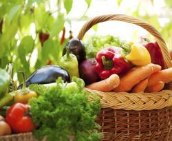 Sparita la ricerca pubblica sulla nutrizione: in nome di quali interessi?