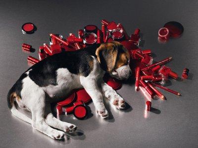 Test cosmetici su animali, una petizione per ribadire il 'NO'