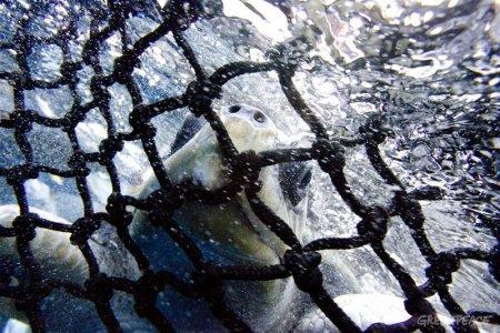 La mattanza che si nasconde dietro la pesca al tonno