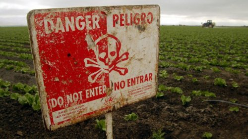 Ogm. Prima la contaminazione, poi le regole: la strategia delle multinazionali dell'agritech