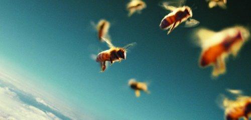 É ora di salvare le api