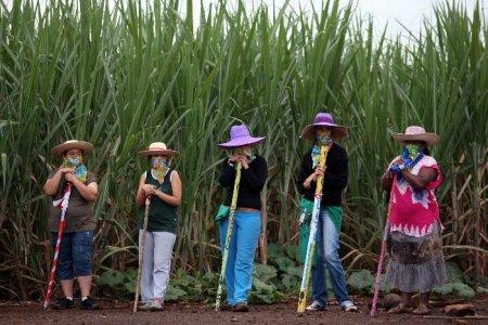 """La Commissione Europea ritira la riforma del mercato delle sementi. Via Campesina: """"Riprendiamoci la nostra sovranità alimentare"""""""
