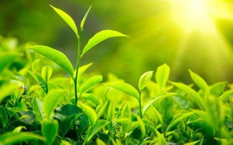 La vita sociale segreta delle piante: il documentario della BBC