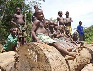 Il Parlamento europeo contro il traffico illegale di legname