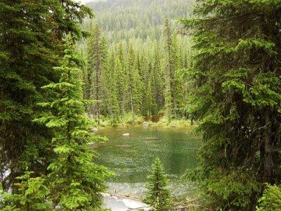 Più alberi e cura dei suoli per combattere il cambiamento climatico