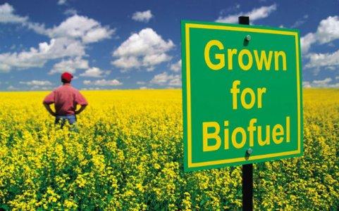 L'ultima follia: meno cibo per fare spazio ai biocarburanti