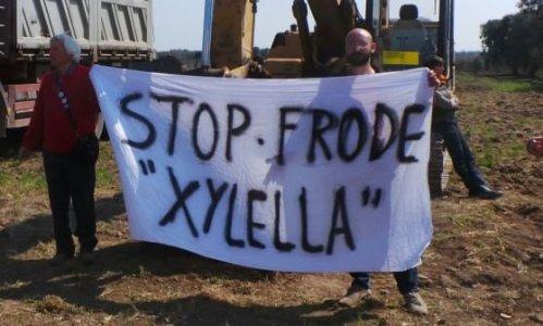 No al massacro degli ulivi in Puglia: «Frode speculativa e procurato allarme»