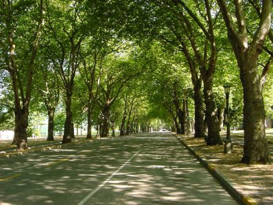 Cassazione: banditi gli alberi lungo le strade extraurbane