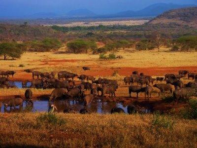 Africa: in pericolo il Patrimonio Mondiale dell'Umanità
