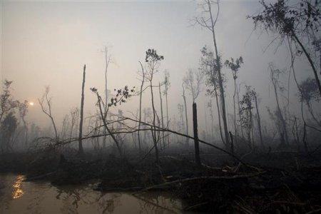 Colosso dell'olio di palma annuncia piano contro la deforestazione