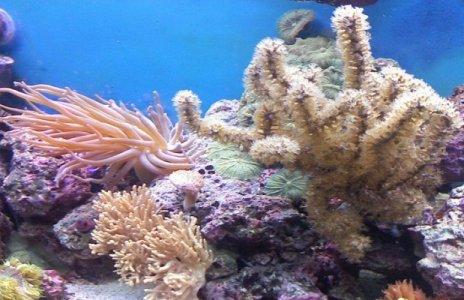 A rischio il Canale di Sicilia, santuario della  biodiversità mediterranea