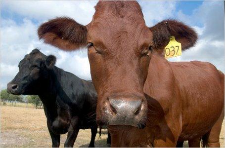 Moratoria sugli animali clonati
