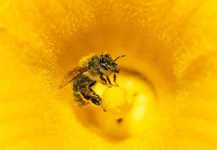 Le zucche, le api e la nostra borsa della spesa