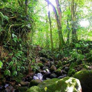 L'Amazzonia si è seccata, il clima è a rischio