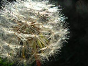 Allergie o intolleranze? That is the question (Prima parte)