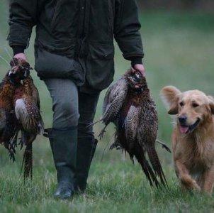 Oggi apre la caccia...come sempre in deroga alla legge