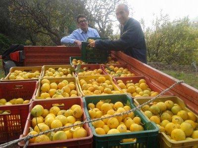 Il pulmino contadino: la rete del cibo sano ed etico