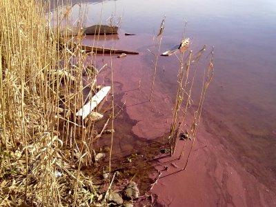Alghe tossiche: il lago di Albano si tinge di rosso
